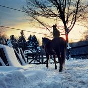December 2010 Goat Rides Horse