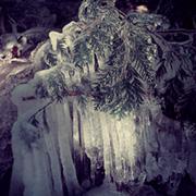 December 2011 Cedar