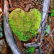 March 2011 Moss Heart