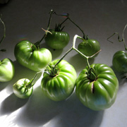 September 2011 Green Tomatoes