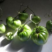 September 2011 Green Tomatoes