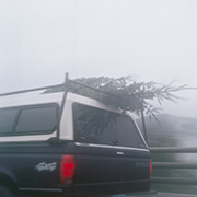December 2012 Untitled (Tree on Truck)